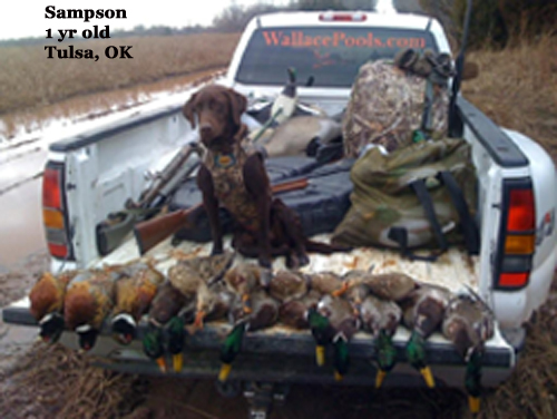 Trained Duck Dogs For Sale In Arkansas